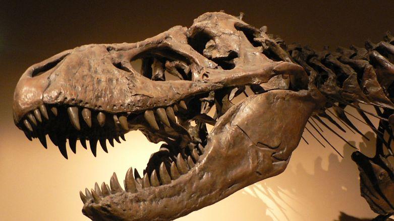 Dinozaurii si evolutia masinilor CNC